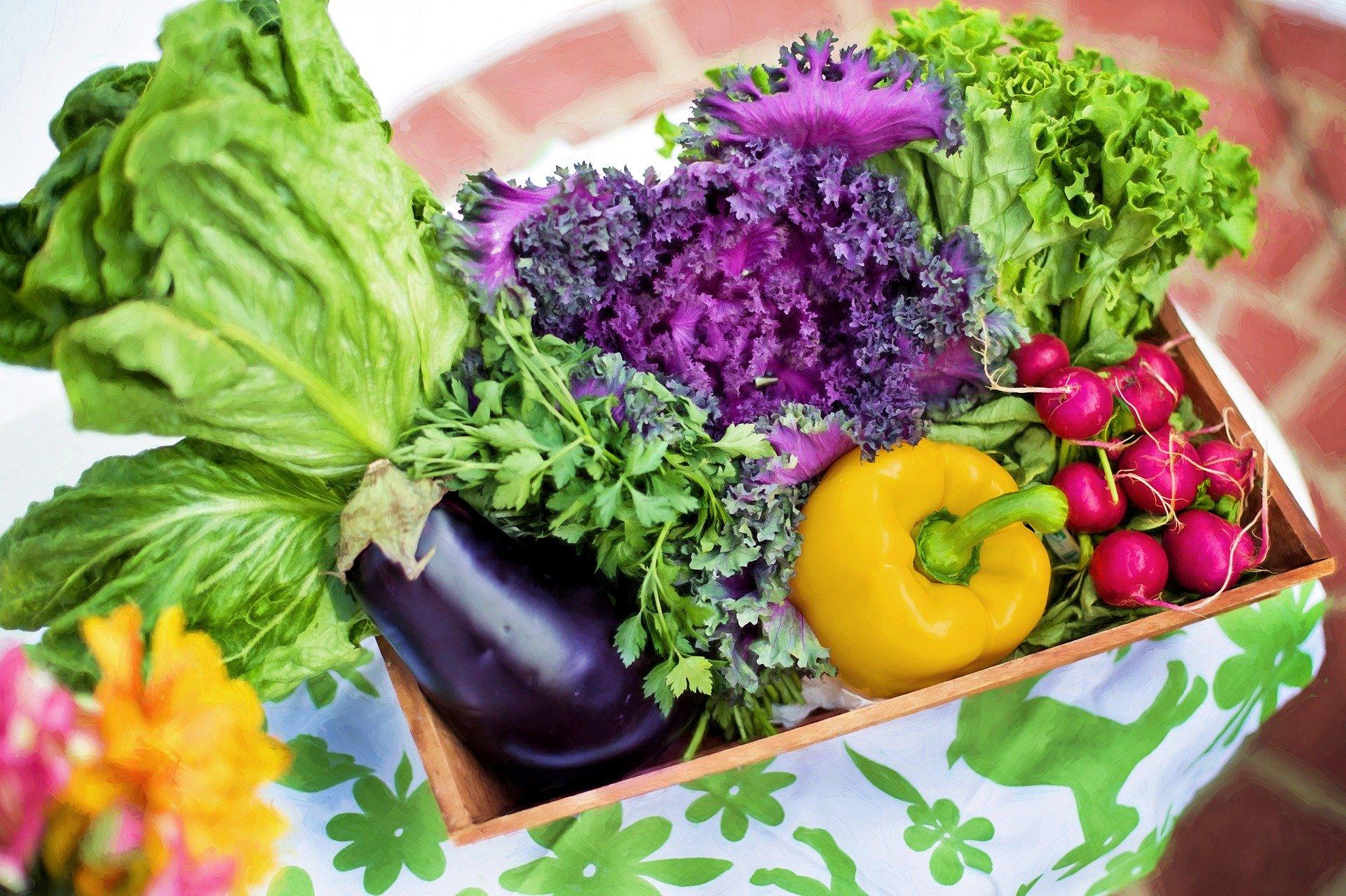 Zahrada v srpnu – co dělat a na co se připravit