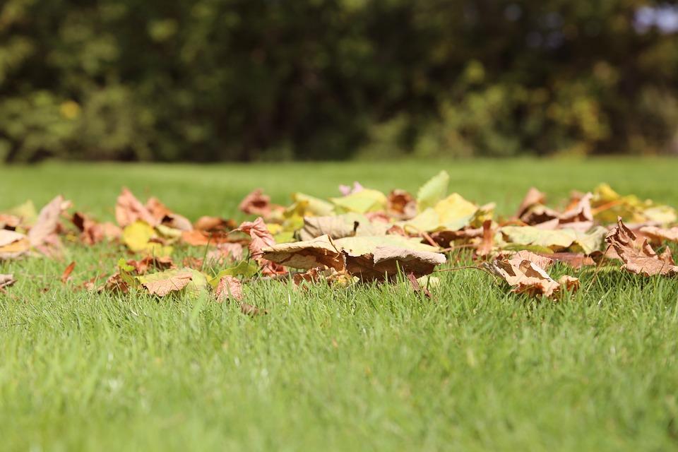 Pět rad pro podzimní zahradu