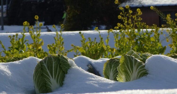 Jak se starat o zimní zahradu
