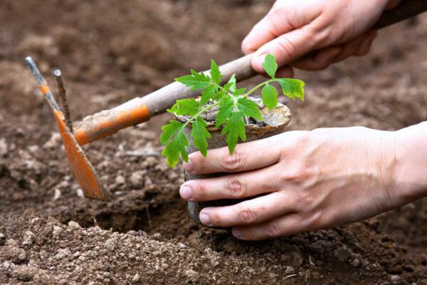 Sázení aneb pravý měsíc zahradkářův začíná v dubnu